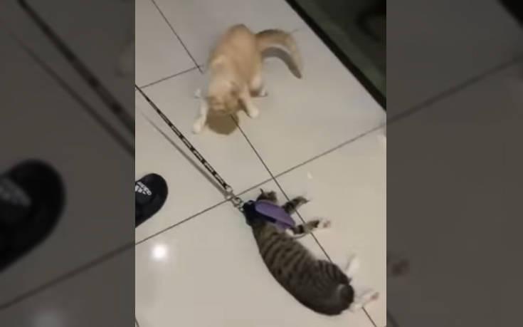 Η πιο τεμπέλα γάτα που έχετε δει – Newsbeast