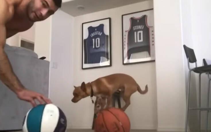 Απίθανοι σκύλοι – ακροβάτες